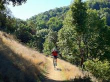 Top 5 Bay Area Mountain Biking Trails